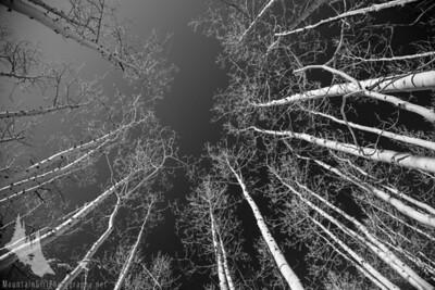 Crested Butte Aspens and Dark Colorado Sky