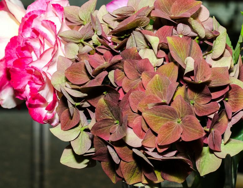 08-03-14 Hydrangea from Joan's yard