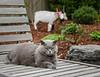 2-27-14 Clyde & Yagi in the Garden
