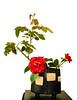 03-15-14 Camellia & Rose Ikebana