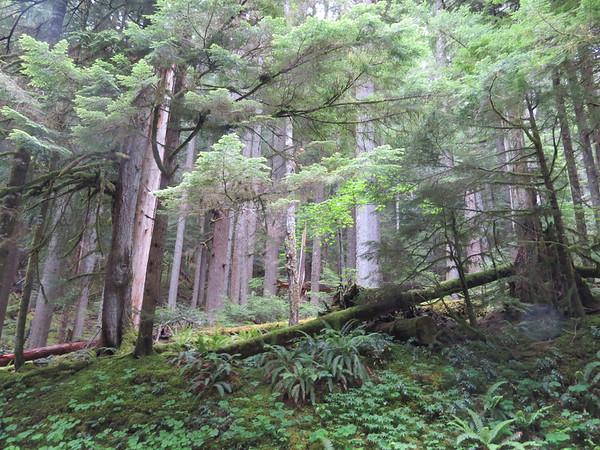 6-14-2014 Mt Rainier