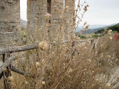 Segesta, Sicily - Johanna Frymoyer