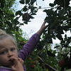 Apple picking at one of the local farms.