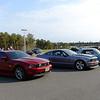 Mustang-Mustang-Mustang<br /> <br /> ©2014 Sam Feinstein