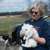 140416 Butterball JOED VIERA/STAFF PHOTOGRAPHER-Pendleton, NY-Sandi Pfohl holds up Cadbury the Easter rabbit rest  at the Lakeview Animal Sanctuary April 16, 2014. Cadbury was born on Easter.