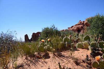 arches_2014_040