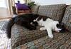 Truffle & Ivy on the sofa