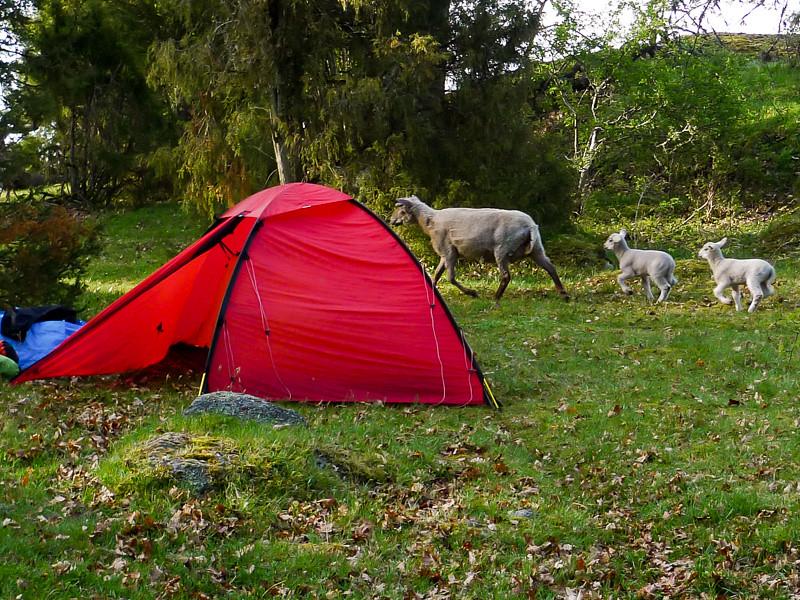 Tältning med naturlig sömnhjälp - eller inte (djuren är vakna kl 4 på natten!)