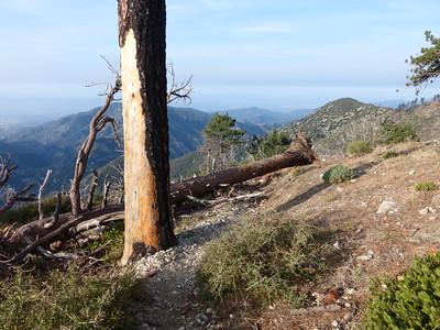 Baldy Bear Canyon, March 29 2014