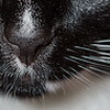 Whiskers (detail).