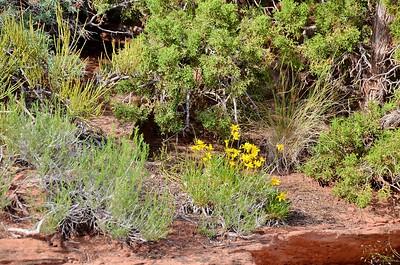 canyonlands_2014_037