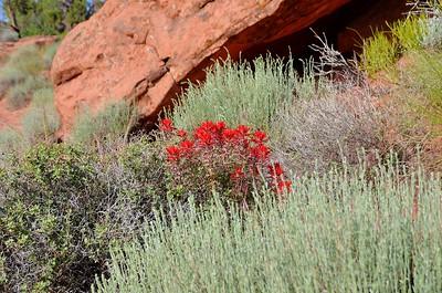 canyonlands_2014_031
