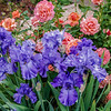 Cher's Garden April 2014
