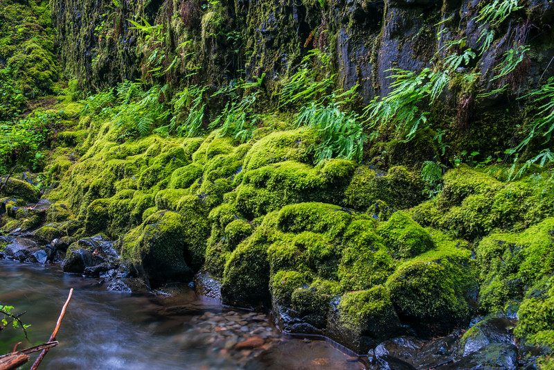 I loved all the mossy green rocks and ferns here.