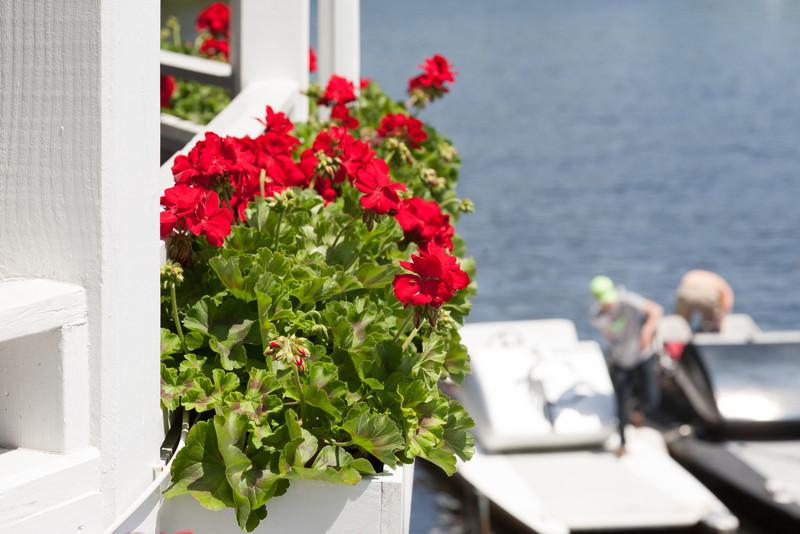 CBC geraniums