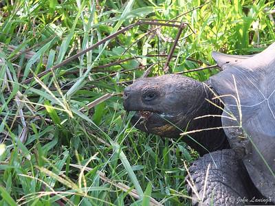 Tortoise on a feed