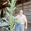 Dick Kretzer of Volant shows the silage corn — about 11 feet tall — that he had taken to enter in the fair. — Mitchel Olszak