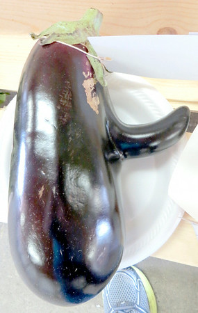This eggplant, which looks as if it has sprouted a nose, was entered into the freak vegetable category at the Lawrence County Fair. — Mitchel Olszak