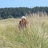 Peeking through the dune grass, Griffiths Priday Trail