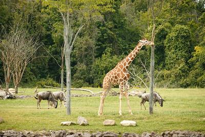 20140915-Pharma_EIT_Zoo-3