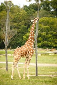 20140915-Pharma_EIT_Zoo-1