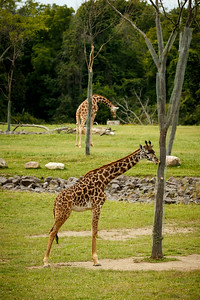 20140915-Pharma_EIT_Zoo-27