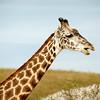 20140915-Pharma_EIT_Zoo-77