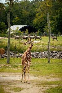 20140915-Pharma_EIT_Zoo-31