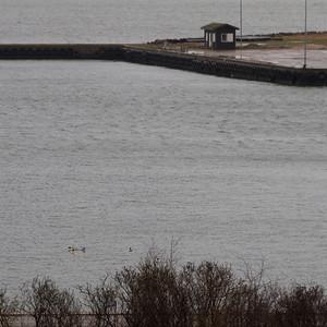 Struer Havn (Jan 19 2014)