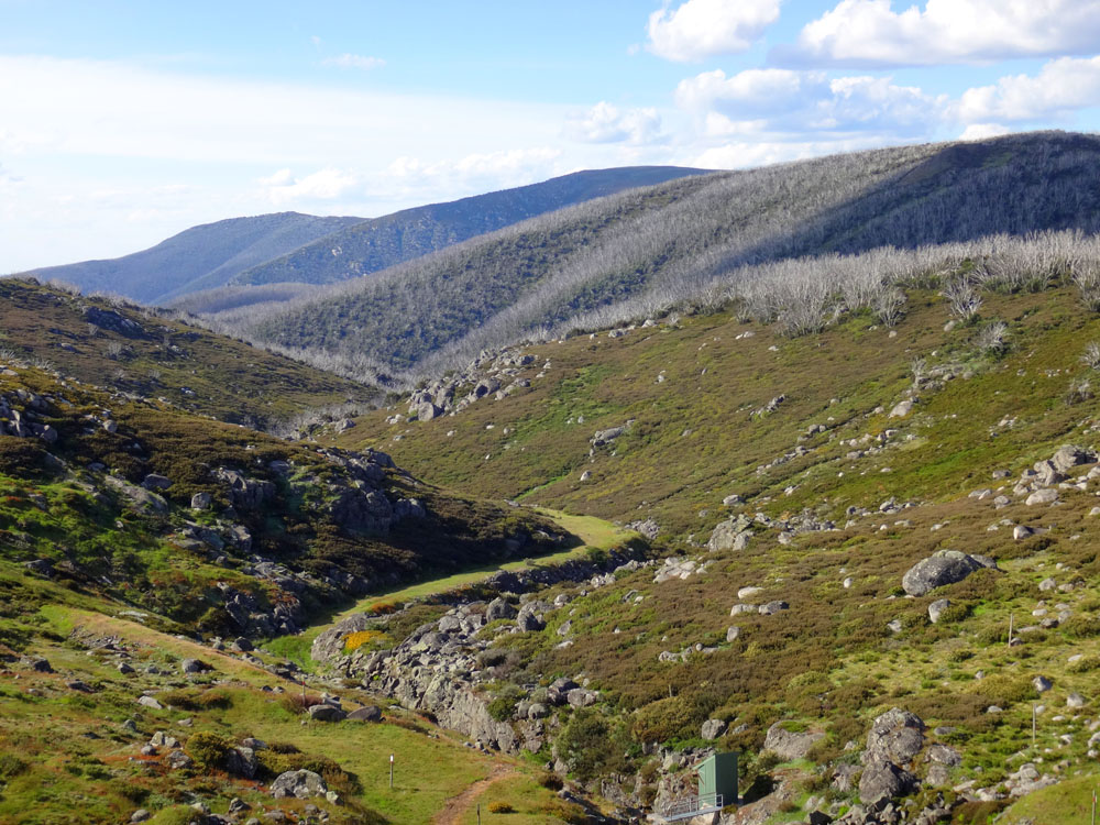 Arriving at Falls Creek in midsummer, near the top of the treeline