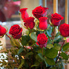140214 3A Ent  JOED VIERA/STAFF PHOTOGRAPHER-Lockport, NY-Roses rest in vases before being picked to make arrangements at Gould Flowers on Friday February 14th, 2014.