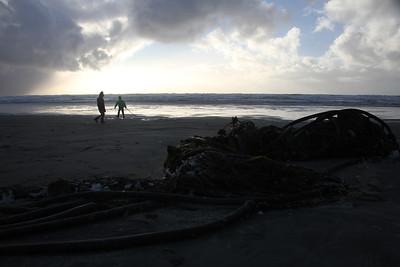 Massive kelp wad on the beach