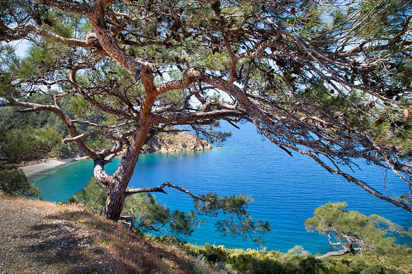 Pine and Sea Coast, Fethiye, Turkey