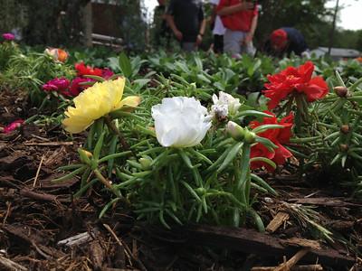 2014 Flower Planting at Hamilton Park