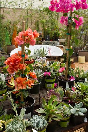 FlowerlandFeb14-2518
