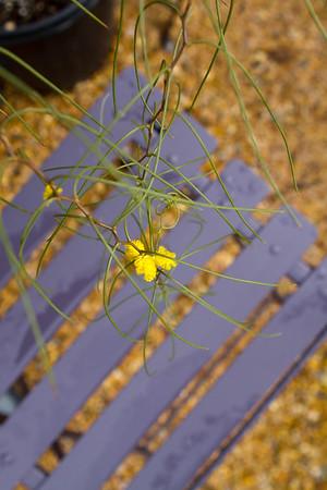FlowerlandFeb14-2510