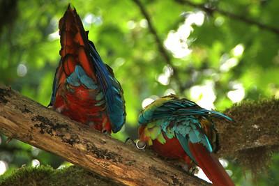 Parrot butt