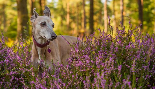 Heather, Devilla Forest