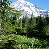 Mt. Rainier, Nisqually Vista Trail, 7-29-14