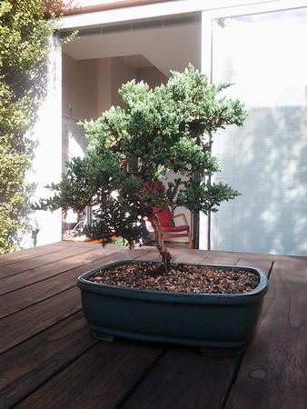 20140308 Zen Garden