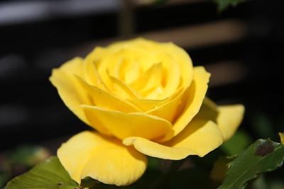 20141101 Garden in bloom