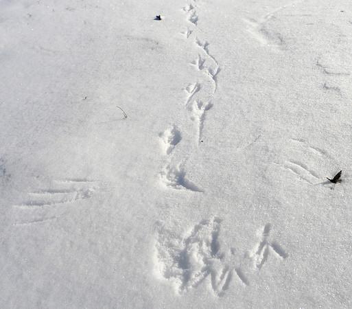MET012014 snowtracks