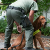 140429 JOED VIERA/STAFF PHOTOGRAPHER-Lockport, NY-A Niagara County Sherrifs Deputy prepares a BloodHound K9 for search of a suspect in the M&T Bank robbery on Tuesday July 29th.