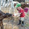 140703 JOED VIERA/STAFF PHOTOGRAPHER-Lockport, NY-Parker Bennett 2 feeds a calf at his grandparents farm on July 3, 2014.
