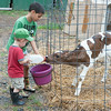 140703 JOED VIERA/STAFF PHOTOGRAPHER-Lockport, NY-Hadyn Bennett 7 and his brother Parker Bennett 2 feed a calf at their grandparents farm on July 3, 2014.