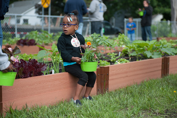 140614 Garden JOED VIERA/STAFF PHOTOGRAPHER-Lockport, NY-Salissa Davis 2 holds a flower pot at the new community garden on the corner of Ontario St. and Hawley St. June 14, 2014