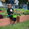 140614 Garden JOED VIERA/STAFF PHOTOGRAPHER-Lockport, NY-Salissa Davis 2 holds a flower pot at the new community garden on the corner of Ontario St. and Hawley St. June 14, 2014