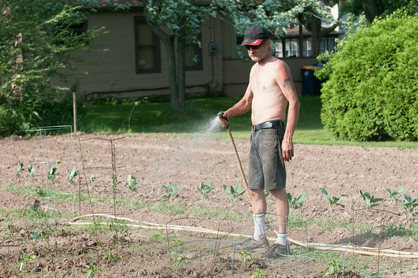 140618 JOED VIERA/STAFF PHOTOGRAPHER-Lockport, NY-Mike Dunham waters his tomatoes at his patch of the community garden. June 17, 2014