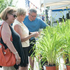 140628 JOED VIERA/STAFF PHOTOGRAPHER-Lockport, NY-Chuck Maynard(right) of Park Lane Daylilies shows Leah Daniel(left) and Barb Gentile(center) lilies at his booth at  the Lockport Arts & Crafts Festival. June 28, 2014