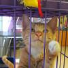 MET061814humane cat